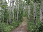 View larger image of Trailers camping at SHERKS RV PARK image #4