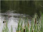 View larger image of Picnic table and trailer camping at SHERKS RV PARK image #5