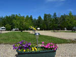 View larger image of Flowers at SHERKS RV PARK image #7