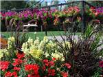 View larger image of Beautiful and colorful flowers beside large lawned area at BAYFIELD RIVERSIDE RV PARK image #2
