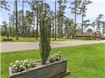 View larger image of Trailer and RV camping at PINE CREST RV PARK OF NEW ORLEANS image #9