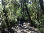 View larger image of Two men and a boy on a trail in the woods at TILLAMOOK BAY CITY RV PARK image #4