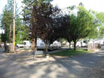 View larger image of RVs and trailers at campground at PIONEER RV PARK image #2