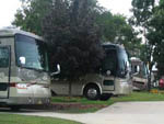 View larger image of RVs camping at COUNTRY GARDENS RV PARK image #7