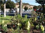 View larger image of RVs camping at NOVATO RV PARK image #2