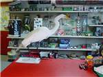 View larger image of White bird standing on counter at general store at HIGHBANKS MARINA  CAMPRESORT image #8