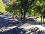 View larger image of RVs and trailers at campgrounds at MOUNTAIN GATE RV PARK image #5