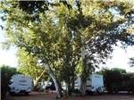 View larger image of Towables parked beneath shade of large tree at ZANE GREY RV VILLAGE image #9