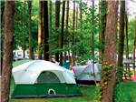 View larger image of Tents in treed sites at LAKE RUDOLPH CAMPGROUND  RV RESORT image #6