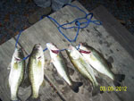 View larger image of Fish on the dock at FAIR HARBOR RV PARK image #9