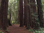 View larger image of Redwoods at EMERALD FOREST CABINS  RV image #2