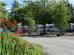 View larger image of Bush with purple flowers at park at ELMA RV PARK image #2