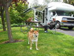 View larger image of Man with dogs camping in RV at BRIDGE RV PARK  CAMPGROUND image #6