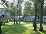 View larger image of Trailers and RV camping at PELICAN PALMS RV PARK image #3