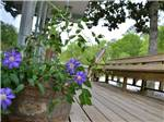 View larger image of Flowers at LAKE PINES RV PARK  CAMPGROUND image #9