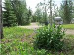 View larger image of Flowers at CAMP TAMARACK RV PARK image #3