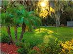 View larger image of Palm trees at WHISPER CREEK RV RESORT image #5
