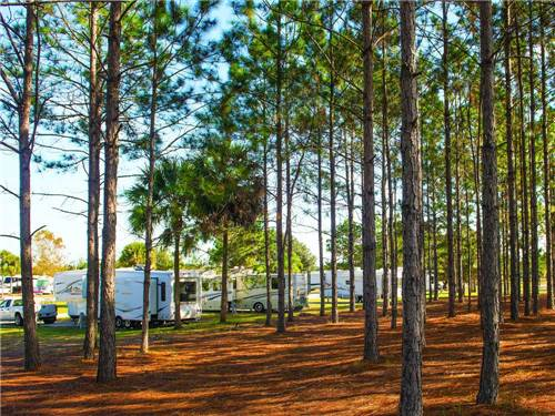 ORLANDO RV RESORT at CLERMONT, FL