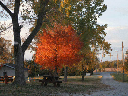 Cottonwood Grove Campground