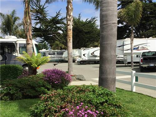 PISMO COAST VILLAGE RV RESORT at PISMO BEACH, CA