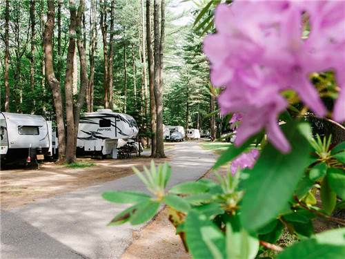 Wild Duck Adult Campground & RV Park
