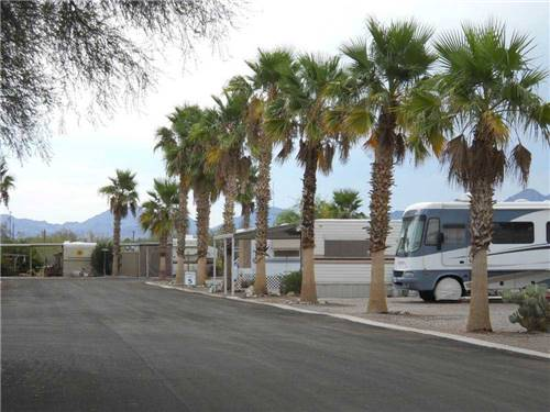 HOLIDAY PALMS RV PARK at QUARTZSITE, AZ
