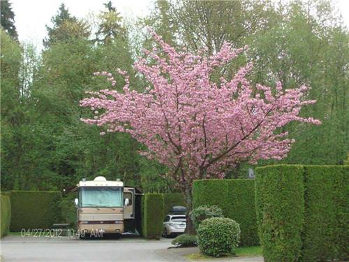 BURNABY CARIBOO RV PARK at BURNABY, BC