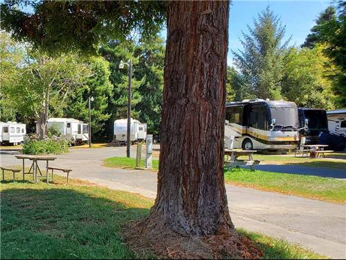 RIVERWALK RV PARK & CAMPGROUND at FORTUNA, CA