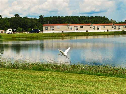 COUSHATTA LUXURY RV RESORT AT RED SHOES PARK at KINDER, LA