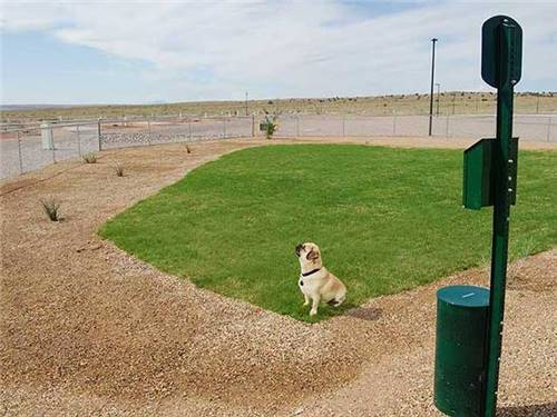 Furry family members can enjoy playing in one of two grassy dog parks!