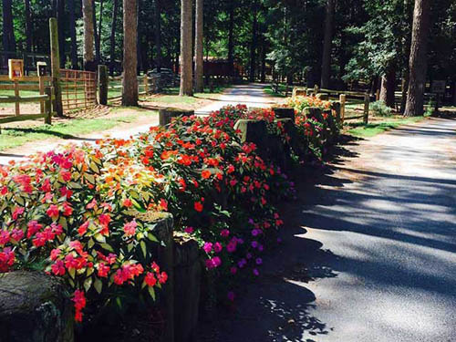 Enjoy our beautiful flowers around the park.