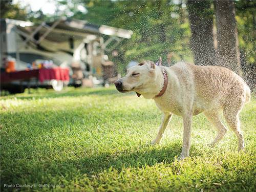 Northern Quest RV Resort is family and pet friendly.