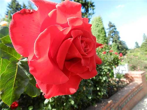 Welcome to Portland - the City of Roses