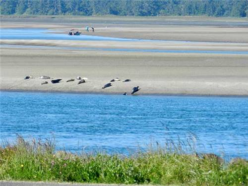 There's also clamming and seal watching on the bay. At many sites you can hear them barking.