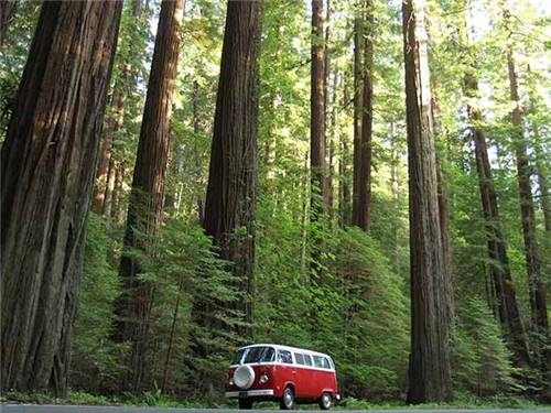 The perfect base to visit the Redwood coast