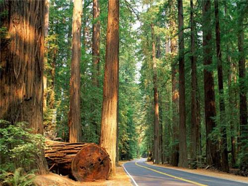 Avenue of the Giants may inspire and amaze you