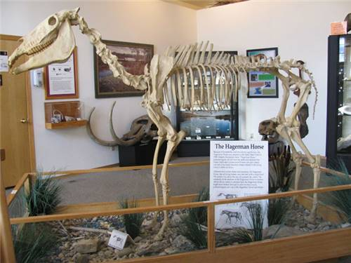 See State Fossils at Hagerman's VIC