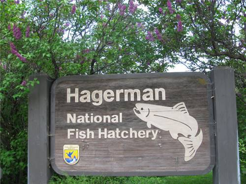 Fish Hatchery Tours: A Must for Anglers