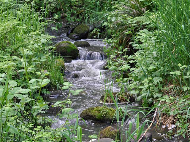 A peaceful stream nearby is sure to relax your senses