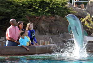 Photo courtesy of SeaWorld - Dolphin Encounter